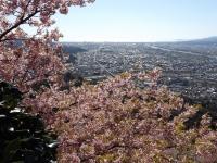 20200223まつだ桜まつり09