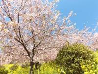 20200223まつだ桜まつり15