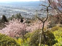 20200223まつだ桜まつり19