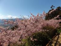 20200223まつだ桜まつり29