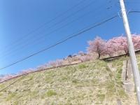 20200223まつだ桜まつり40