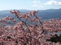 20200223まつだ桜まつり31