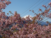 20200223まつだ桜まつり37