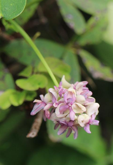 可愛い花が咲いて 1 9 29