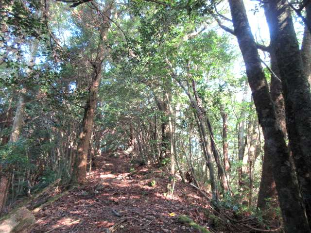 IMG0017JPG明るい林
