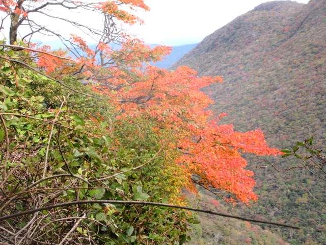 IMG0041JPG紅葉と黒岳