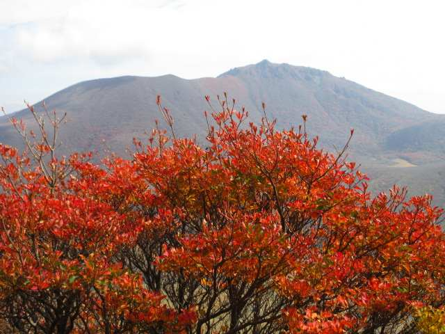 IMG0105JPG紅葉と大船山