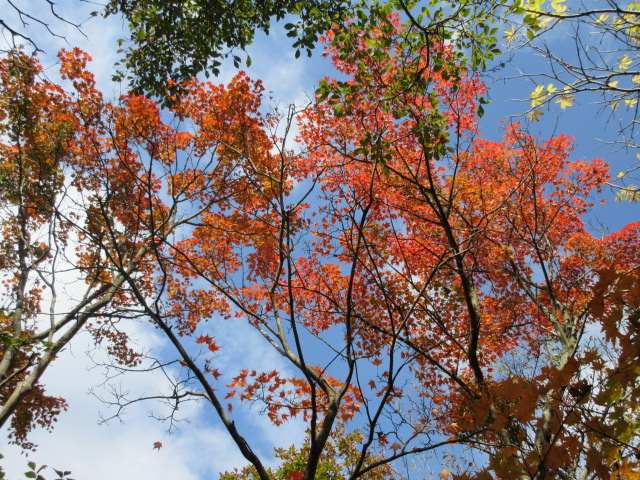 IMG0139JPG天空の紅葉
