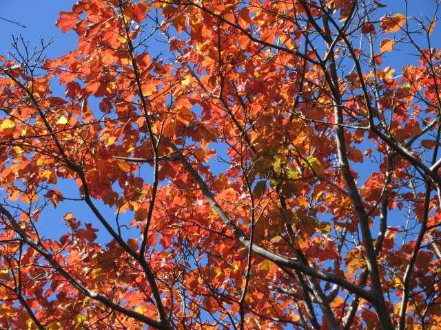 IMG014JPG林の紅葉1