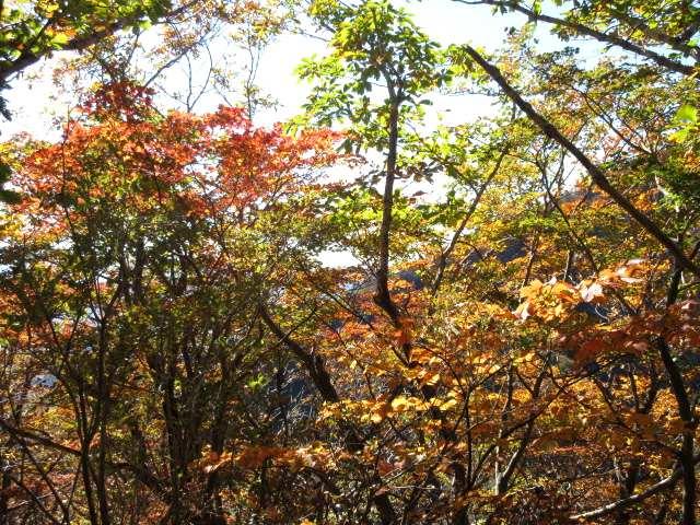IMG0076JPG林の紅葉