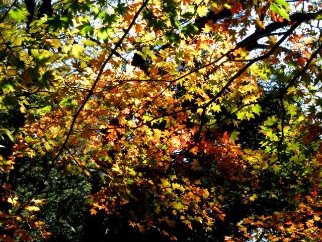 IMG095JPG林の紅葉6