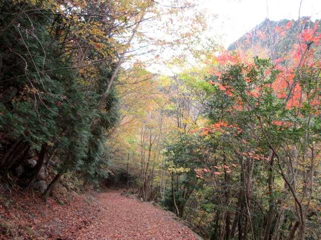 IMG0017JPG林道の紅葉