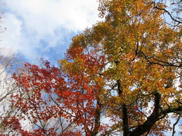IMG0070JPGコラボ高木