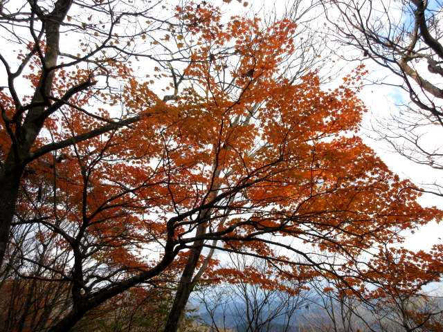 IMG0094JPG高木紅葉
