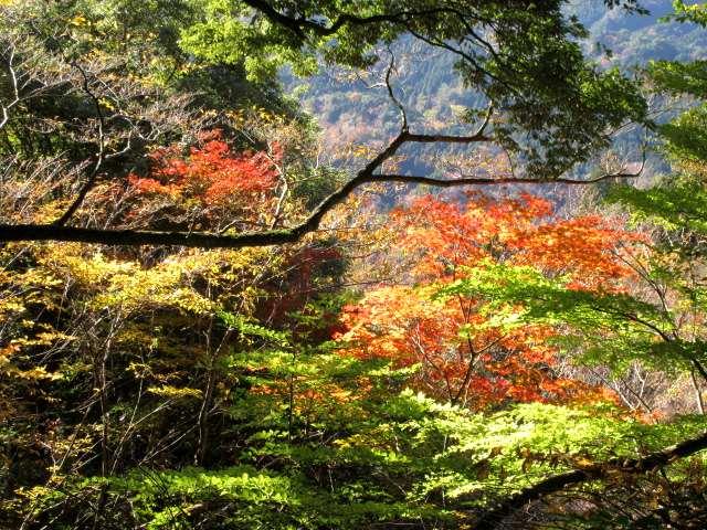 IMG0023JPG山麓の紅葉です