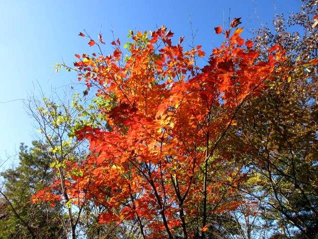 IMG0026JPG天空の紅葉です