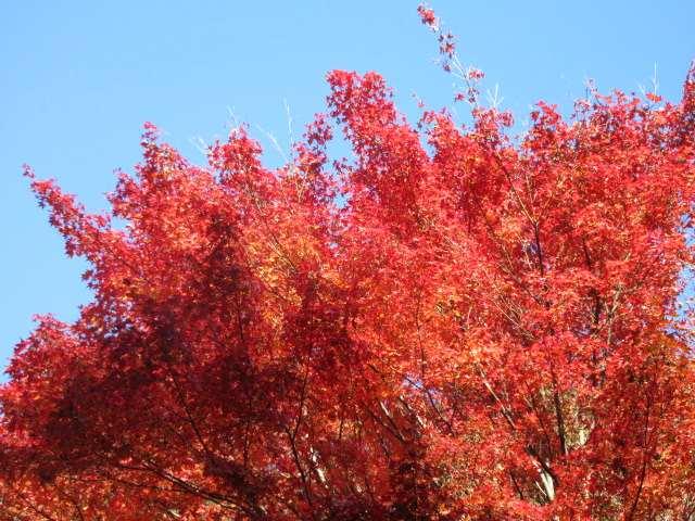 IMG0101JPG龍門峡の紅葉です7
