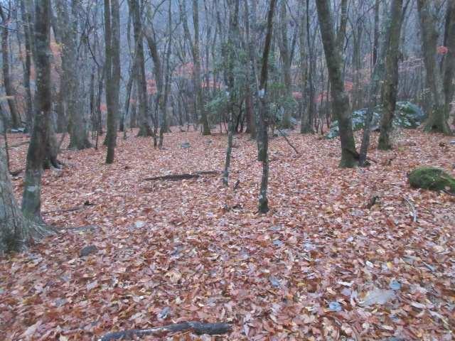 IMG0003JPG落葉した林
