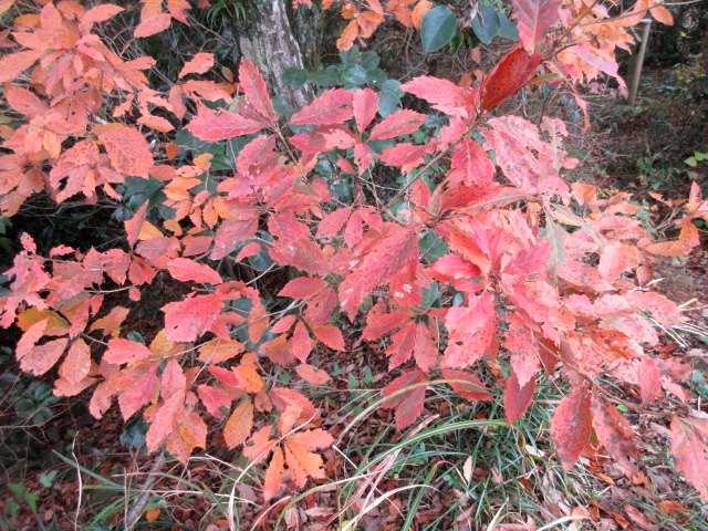 IMG0022JPG林の紅葉