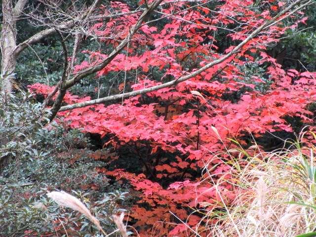 IMG0024JPG林の紅葉2