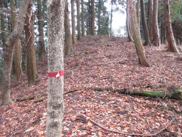 IMG0023JPGガラメキ峠上塚山間の稜線鞍部のテープ