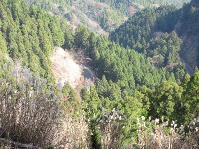 IMG0046JPG眼下に舗装の林道藤原からの