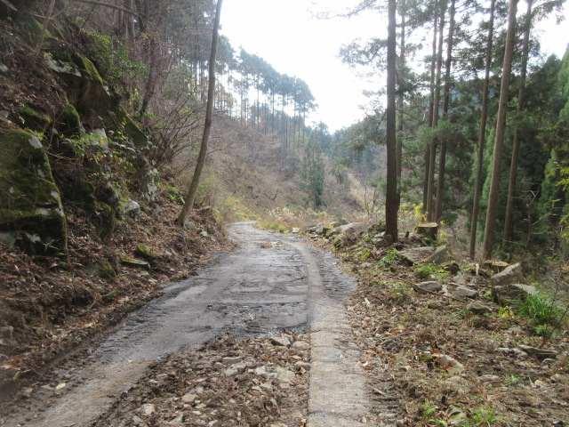 IMG0060JPG林道を市木集落に下る
