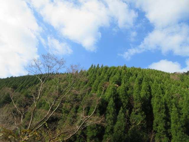 IMG0061JPGすっかり冬晴れの山歩き