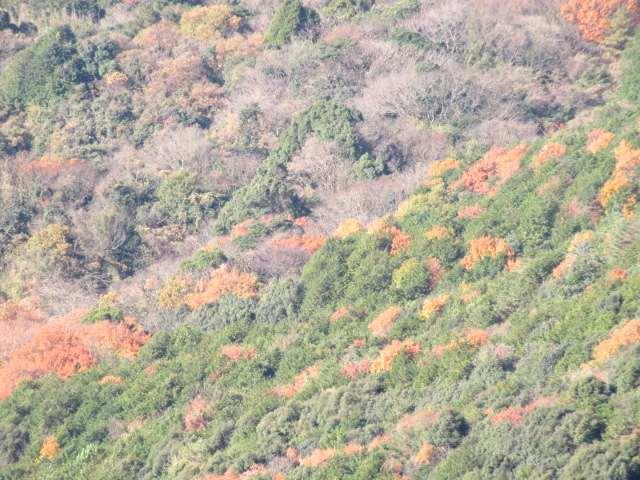IMG0024JPG山腹の紅葉