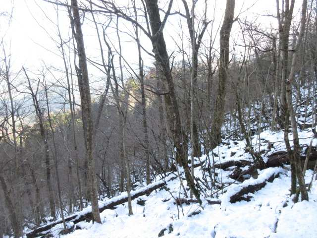 IMG0013JPGシオジの林