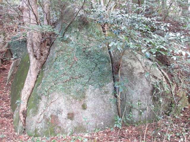 IMG0021JPG根性の木