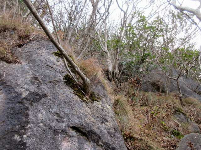 IMG0011JPG岩に木も