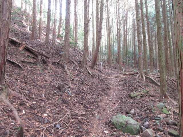 IMG0079JPG開けた登山道