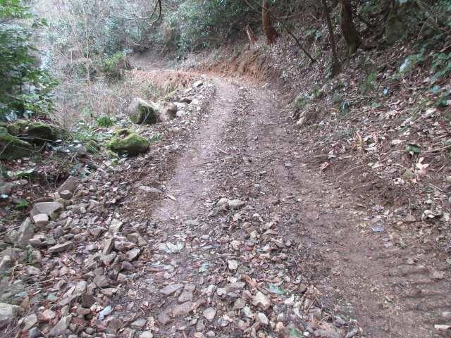IMG0111JPG整地された登山道
