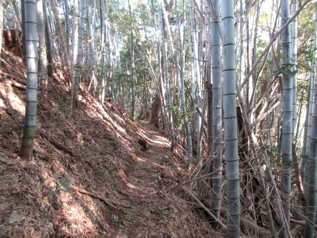 IMG0031JPG竹林帯