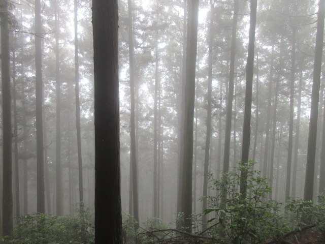IMG0020JPGガスの林