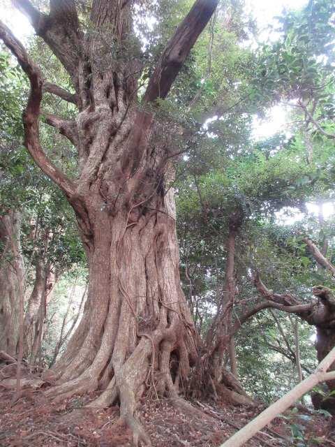 IMG0011JPG大樹2