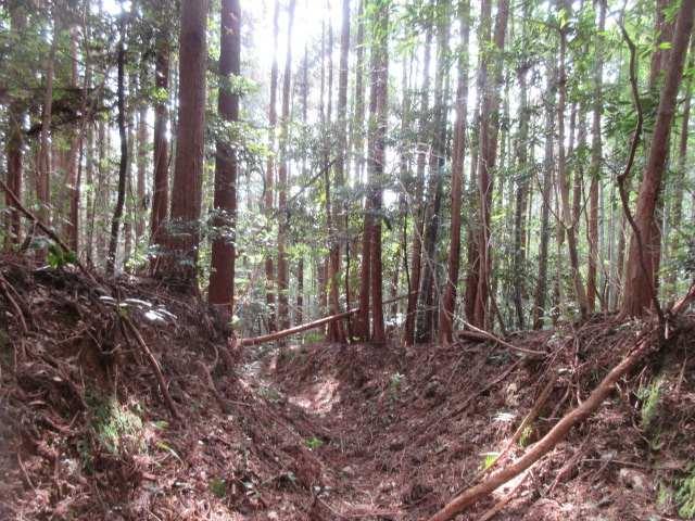 IMG0030JPG杉林のV地を下る