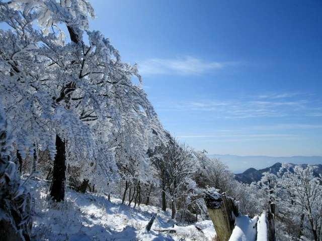 IMG0035JPG冠雪樹