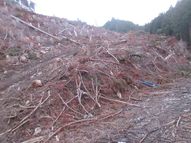 IMG0002JPG伐採が終わった林道支線
