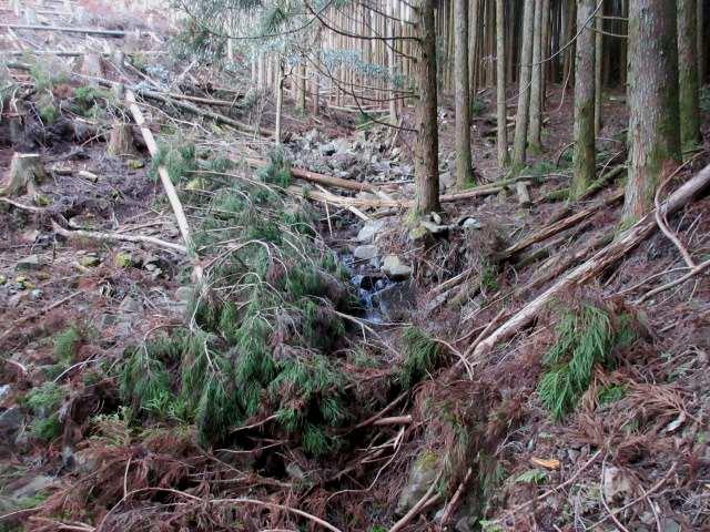 IMG0006JPG谷に倒れた木