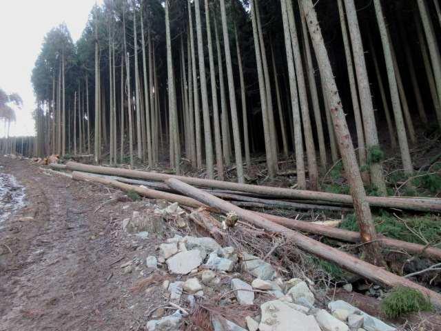 IMG0009JPG谷沿いの作業道を歩く