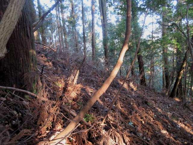 IMG0013JPG仏来の山への急登です