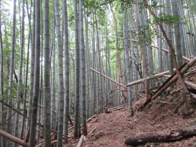 IMG0084JPG竹林帯