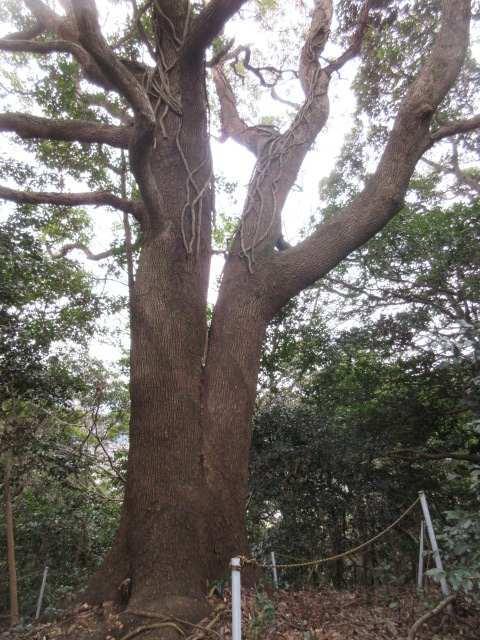 IMG0044JPG大樹2