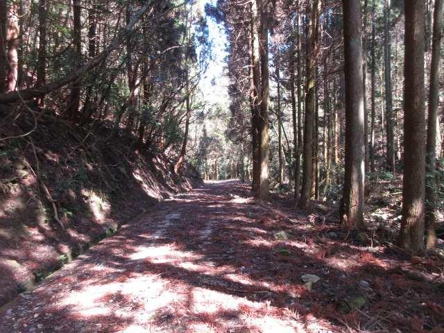 IMG0060JPG開けた林道を下る