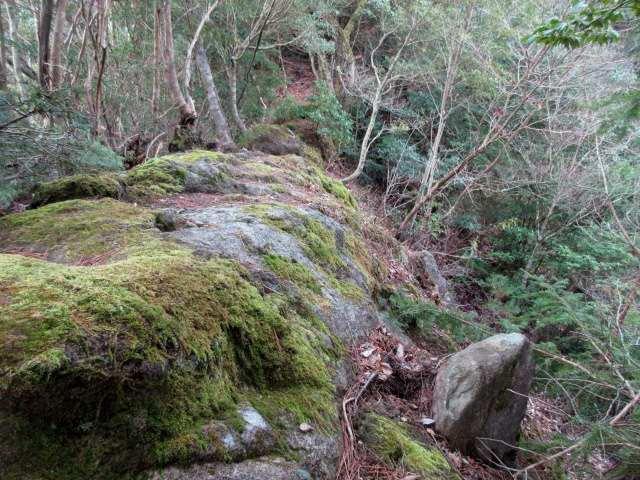 IMG0007JPG苔の岩稜歩き