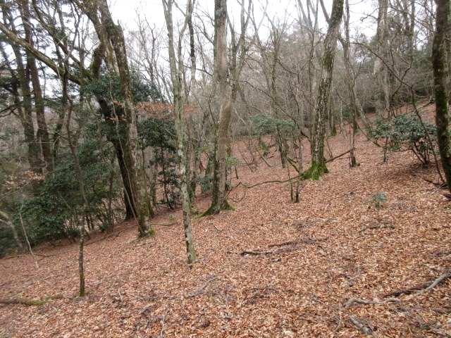 IMG0020JPG枯葉の林