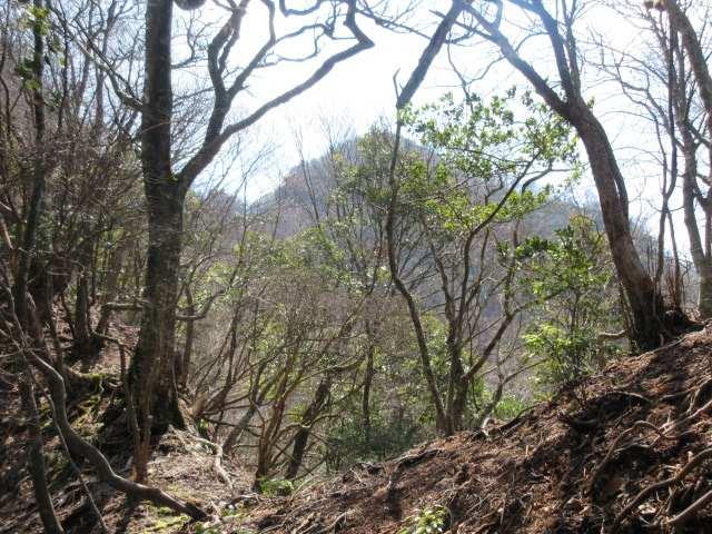 IMG0047JPG樹間の岳滅鬼岳