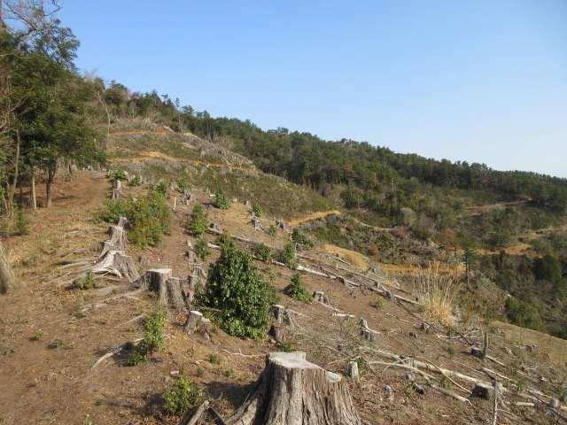IMG0012JPG伐採地との境界を